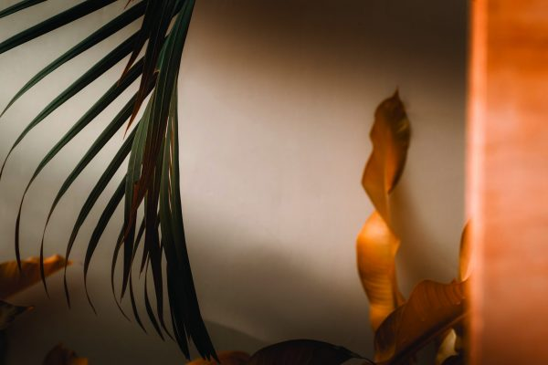 Palm tree leaves against white wall. Autumn warm earthy tones brown orange and dark green colors, creative colorful minimalism. Horizontal; Shutterstock ID 1494385745; Purchase Order: -